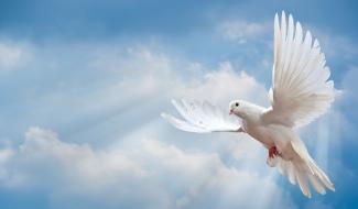 Batismo no Espírito Santo: Aprenda o significado!